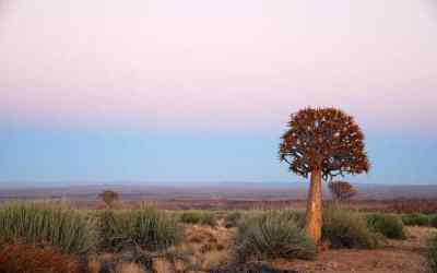 Weird and Wonderful Plants of Namibia