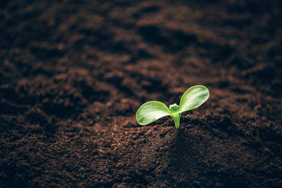 Flora Flash: Seeds Want To Grow