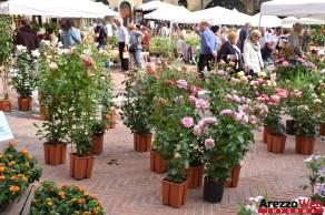 Fiori in Piazza Grande - Arezzo 07