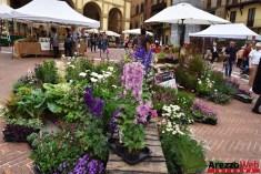 Fiori in Piazza Grande - Arezzo 13