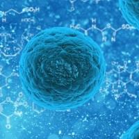 Superbatterio New Dehli: morte sospetta presso l'Ospedale di Siena
