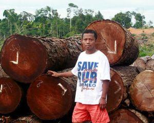 Madera ilegal en Indonesia