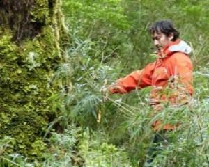 Bosque nativo en Chiloé. Foto: UACh.