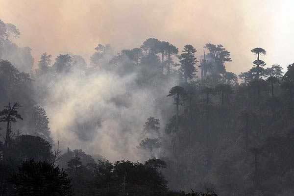 Incendio en Reserva China Muerta ha consumido 6.204 hectáreas de bosques autóctonos
