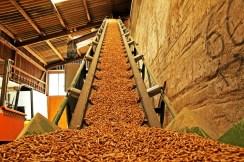 Estiman que el 40% de la energía que se consume en la provincia proviene de la biomasa