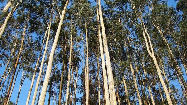 En Argentina hay un millón de hectáreas con forestación.