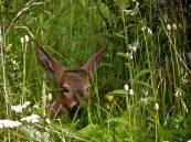 Foto Tompkins Conservation 3
