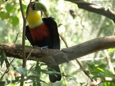 Biodiversidad5 (2)