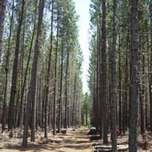 26- forestaciones