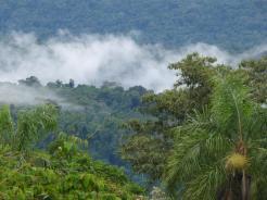 Selva Misionera 14