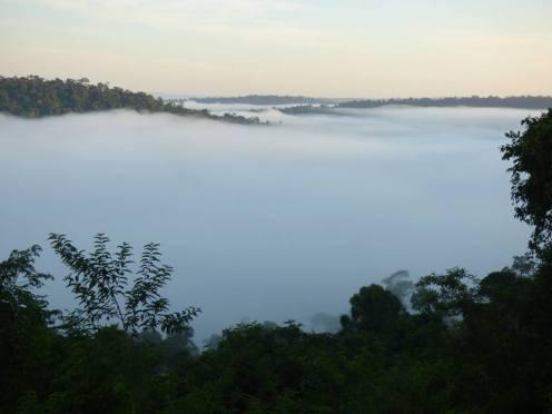 Selva Misionera 9