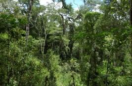 EcosistemasForestales