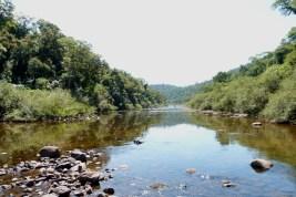 EcosistemasForestales1