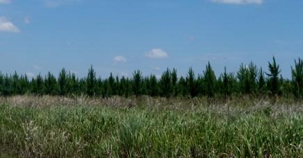 Forestaciones20