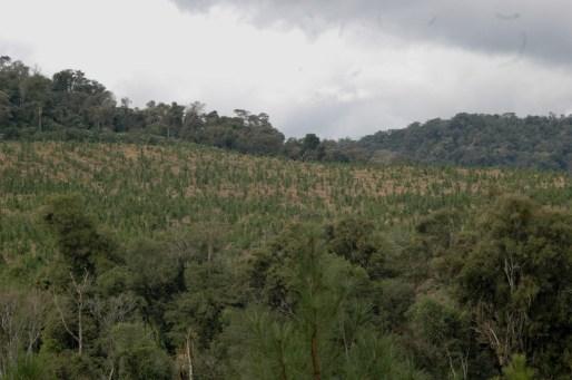 ForestacionesMisiones3