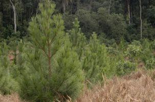 ForestacionesMisiones4
