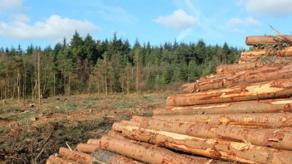 41-cosecha forestal