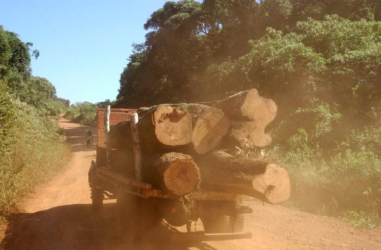 Deforestacion6