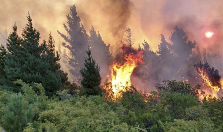 Combaten incendios forestales en Patagonia: en Epuyén ya afectaron 1350  hectáreas - Argentina Forestal