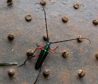 Insectos10