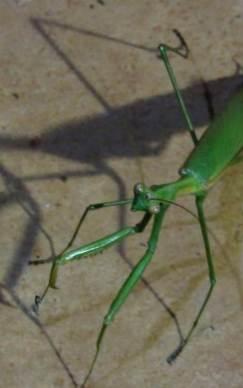 Insectos12
