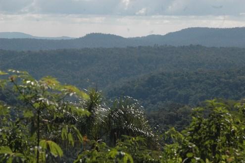 2 -bosques