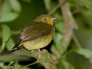 Biodiversidad10