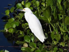 Pantanal(aventura Salto y Selva Nolde)