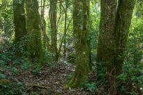 Selva Misionera (FotoFloranVonderFecht2)