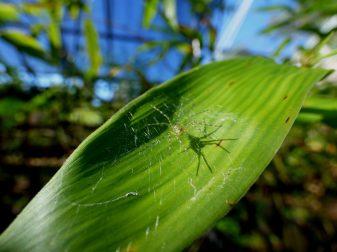 Selva Misiones (Biodiversidad)