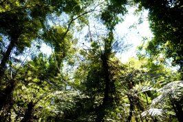 FotoArgentinaForestal.SelvaMisionera(Ecosistema)
