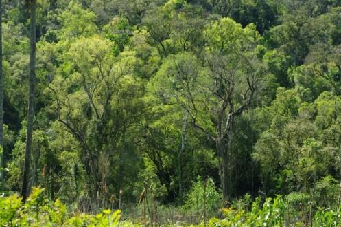 Conservacion Bosques Nativos