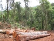 12 - Bosques Nativos