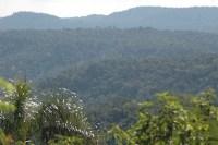13- Bosques Nativos