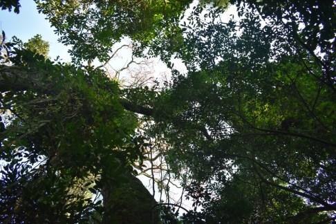 Lapacho(CentroForestal)7