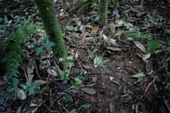 Lapacho(bosque6)
