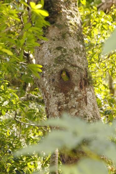 Reserva Privada Yaguaroundi (8)
