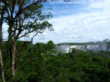 selva misionera1