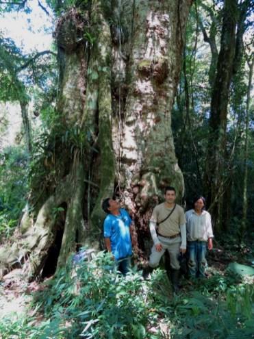 Una grapia, en la Reserva de Usos Múltiples Guaraní, la cual los Guaranies, Cantalicio y Emilio, estan comprometidos con el cuidado a quien le dicen el abuelo de las Yvyra pere.