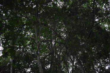 Reserva Mbaracayu (78)