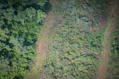 Desmontes ilegales en la finca Cuchuy a pesar de las resoluciones de Nación y Salta