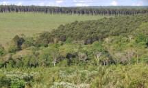 Paisaje Forestal en Misiones