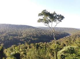 Selva (2)
