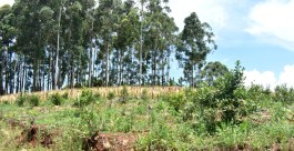 Cultivo de yerba, tabaco y forestacion