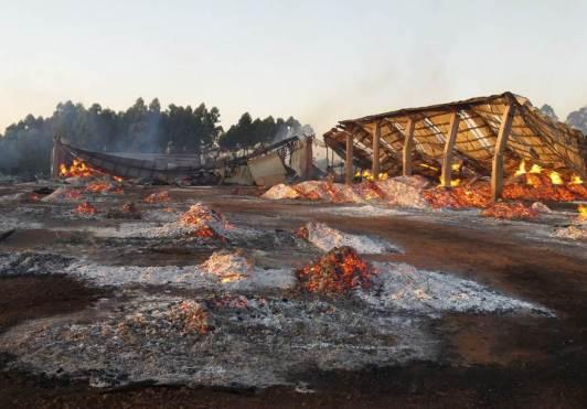 Taeda SA Incendio Montecarlo (3)