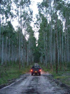 EntreRiosForestal 1