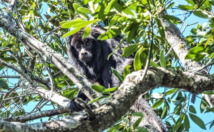 Foto Reserva biosfera Lagna Oca (Formosa) 4