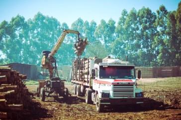 Industria forestal de Corrientes