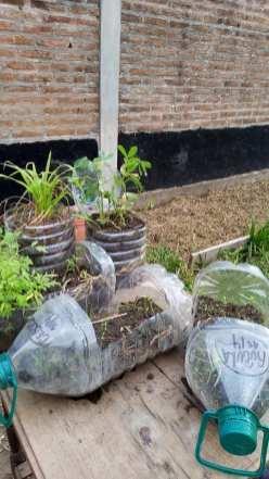 Huella Verde Huerta en Maceta