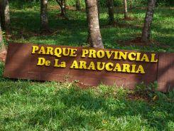 PPAraucaria-1
